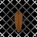 Bug Ii Animal Icon