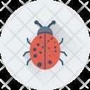 Bug Malware Ladybird Icon