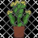 Bupleurum Potted Plant Icon