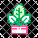 Bush Icon