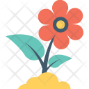 Buttercup Flower Icon