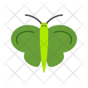 Butterfly Bug Insect Icon