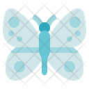 Biology Butterfly Animal Icon
