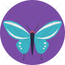 Butterfly Insect Blue Icon