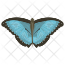 Butterfly Insect Springtime Animal Icon