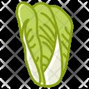 Cabbage Vegetable Garden Icon