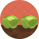 Cabbage Vegetable Crop Icon
