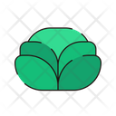 Cabbage Fresh Vegetables Icon