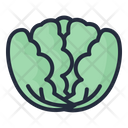 Cabbage Vegetable Healthy Icon