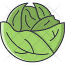Cabbage Vegetable Cooking Icon
