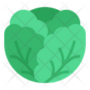 Cabbage Fruit Vegetables Icon