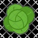 Cabbage Leafy Green Icon
