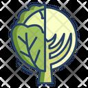 Cabbage Vegetarian Vegetable Icon