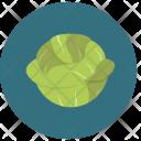 Cabbage Food Healthy Icon