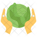 Cabbage Vegetable Salad Icon