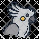 Cacktoo Icon