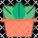 Cactus Icon