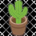 Cactus Wild Plant Succulent Icon