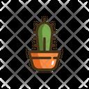 Cactus Cacti Plant Cactus Plant Icon