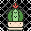 Cactus Garden Plant Icon