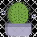 Cactus Mammillaria Hahniana Cactus Pot Cactus Plant Icon