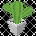 Cactus Plant Icon