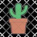 Cactus Plant Cactus Pot Cactus Icon