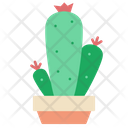Cactus Plant Cactus Pot Plant Icon