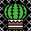 Cactus Garden Nature Icon