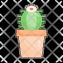 Cactus Plant Hobby Icon