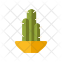 Cactuspot Icon