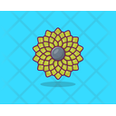 Calendula Sunflower Flower Icon