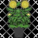 Calendula Potted Plant Icon
