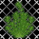 Calotropis Gigantea Wild Tree Shrub Icon
