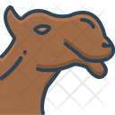 Camel Face Animal Icon