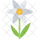 Camomile Flower Natural Icon