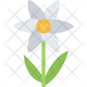 Camomile Ecology Nature Icon