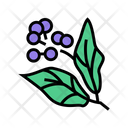 Camphor Aromatherapy Color Icon