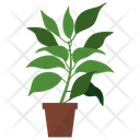 Camphor Potted Plant Icon
