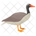 Canadian Goose Icon