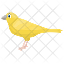 Canary Domestic Canary Songbird Icon