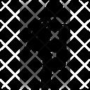 Caneball Icon