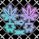 Cannabis Cloning Cannabis Cloning Icon