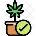 Cannabis plant Icon