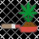 Cannabis Plant Marijuana Plant Cannabis Icon