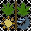 Cannabis Usage Icon