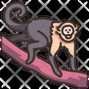Capuchin Icon