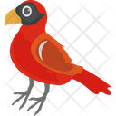 Bird Cardinal Bird Feather Creature Icon