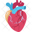 Body Cardiology Heart Icon