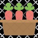 Carrot Farming Icon